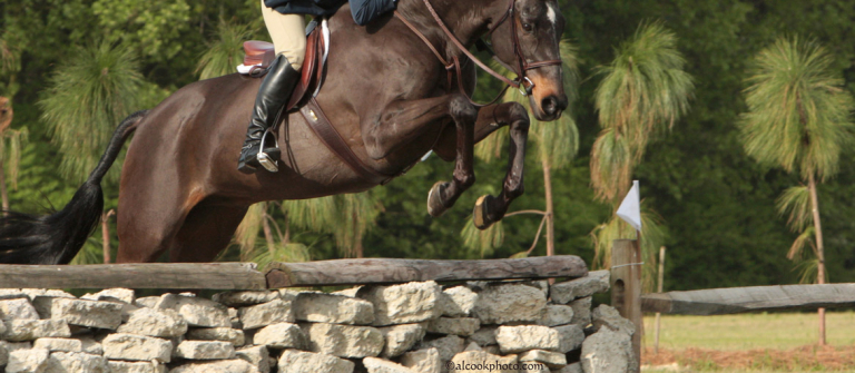 Equestrian studies