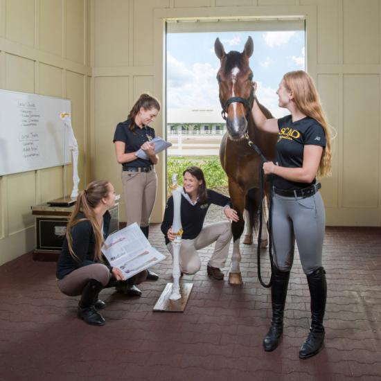 Equestrian studies students examine horse anatomy