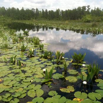 Krisitne K. Stevens, Okefenokee Swamp prairie